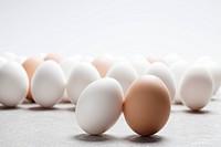 egg, white egg