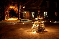 Christmas tree in a winter night