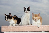 three young domestic cats on wall
