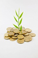 Plant, coins, symbolic image for a successful investment, growing returns