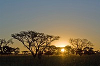 Sunset over African scrubland, North West Province, South Africa