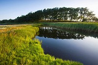 Wetland and windbreak, Urehoved, Denmark