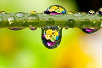 Dew drops reflecting flowers