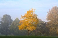 Fall trees in mist