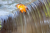 Fall leaf on top of a waterfall