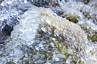 Ice covered moss and rocks after an ice storm