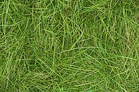 Artificial grass, close up