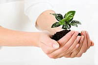 Growing green plant in the female hand