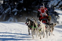 Dog_sled team, Unterjoch, Bavaria, Germany, Europe