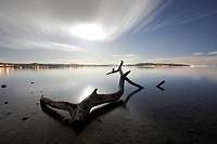 Flotsam on Lake Constance at Dingelsdorf in the moonlight, Baden_Wuerttemberg, Germany, Europe