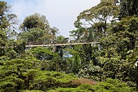 Rainforest, Arenal Hanging Bridges, Costa Rica