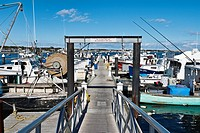 Fishing boats docked at MacMillan Wharf , Provincetown, MA, USA