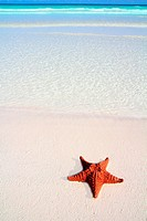 beautiful caribbean starfish tropical sand turquoise beach