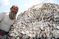 A pile of Hilsha fish loads to a push cart at Fishery Ghat in Chittagong It will be delivered to the different market places in Bangladesh It is the n...