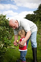 A grandfather and his granddaughter picking apples