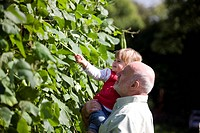 A grandfather and his granddaughter picking runner beans