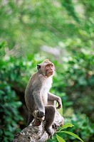 Macaque sitting on tree