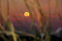 Grasslands cover the foothills of the Santa Rita Mountains north of Sonoita, Arizona, USA, in the Sonoran Desert