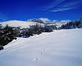 Jeju island, snow scene at Hanla mountain, footprint of animal, winter