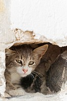 Europe, Greece, Cyclades, Santorini, Cat in hole (thumbnail)