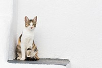 Europe, Greece, Cyclades, Oia, Santorini, Cat sitting in a corner