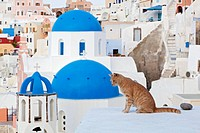 Europe, Greece, Cyclades, Thira, Santorini, Oia, Cat sitting on wall