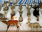 Paris, France, French Art Museum, Hunting Museum, Musée de la Chasse, inside, Installation of Hunting Trophies