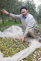 Old man with olive harvest