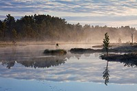 Moorland with lake and pine forest in Sweden
