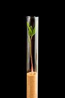 Plant breeding in vitro