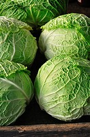 Cabbages, Close Up