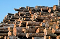 Huge pile of softwood logs at sawmill, Eureka, California