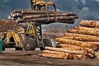 Massive logging machine moving softwood logs at lumber mill, Coos Bay Oregon