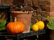 Colourful pumpkins on a potting table with terracotta plant pot in an English Cottage Garden, England, United Kingdom