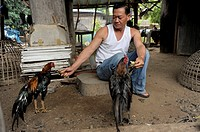 thai man with his prized fighting cocks , village outside mae sot, northern thailand