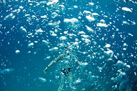 Underwater view of a swimmer behind a wall of bubbles in the tropical waters off of Mana Island, Fiji.