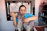 A veterinarian uses a stethoscope on a Schnauzer dog at a Pet Hospital in Condesa, Mexico City, Mexico, February 1, 2011