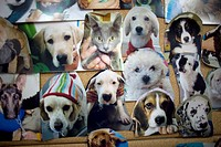 Pictures of pets are displayed at a Pet Hospital in Condesa, Mexico City, Mexico, February 22, 2011