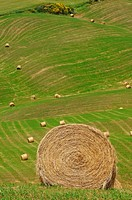 Val d´Orcia, Orcia Valley, Fields with straw bales, Pienza, Siena Province, Tuscany, Italy.