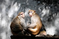 Monkey couple