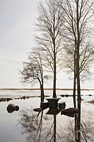 Flooded River Emaj&#245;gi and Trees Silhouettes in Rannu J&#245;esuu by Lake V&#245;rtsj&#228;rv, Estonia