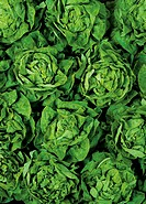 Green salad background