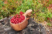 New picked cranberries in a small wooden bowl