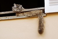 Cat in the window. San Telmo, Majorca, Balearic Islands. Spain.