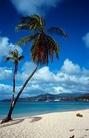 Grand Anse Beach _ Beautiful palm fringed beach on the island of Grenada