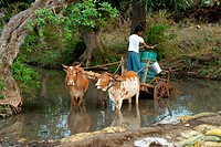 India: Liquid of life: Water is a vital life_line for humans Living in rural India getting potable water can be difficult Seen here, the villagers use...