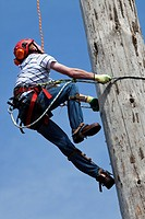Workman climbing a telegraph pole using ropes and leg spikes, Scotland, UK, United Kingdom