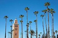 Morocco, North Africa, Africa, Marrakech, Koutobia, tower, rook, palms