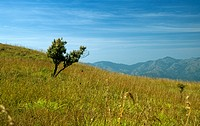 GRASSLANDS IN WESTERN GHATS, KERALA, INDIA
