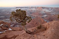 Juniper at the edge of the mesa in the winter with snow, Dead Horse State Park, Utah, United States of America, North America